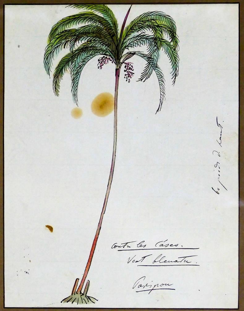 [32] Palmeira, 1815. Louis Choris [1795-1828]. Coleção Catarina. Fonte Ylmar Corrêa Neto.