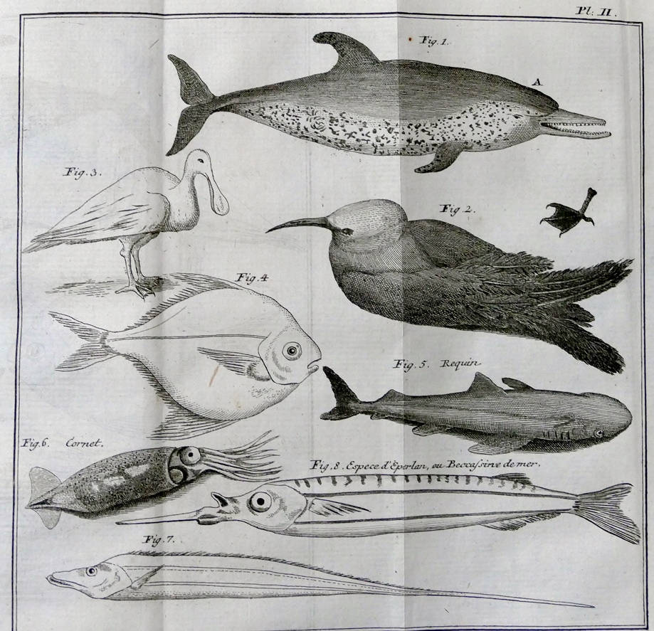 [38] História Natural da Ilha de Santa Catarina, 1763. Abade Jacques Pernetty [1696-1777]. Coleção Catarina. Fonte Ylmar Corrêa Neto.